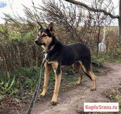 Собака в добрые руки Казань