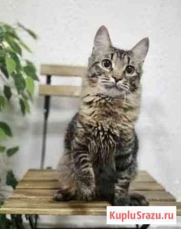 Молодой котик в добрые ручки Казань