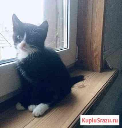 Котёнок в добрые руки Казань