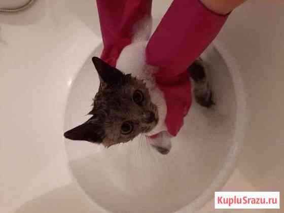 Кошка в хорошие руки Казань
