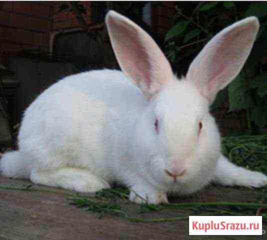 Продам мясо кролика цена за кг,можно живым весом Альметьевск