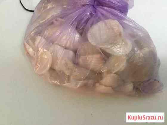Ракушки привезённые из оаэ Альметьевск
