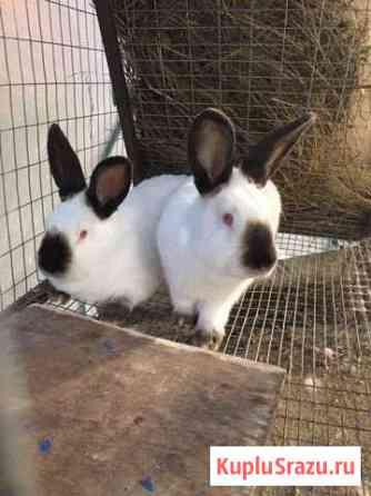 Кролики калифорния Кыштым