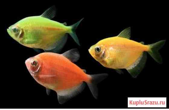 Рыба Арзамас