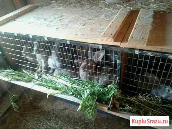 Кролики Воротынец