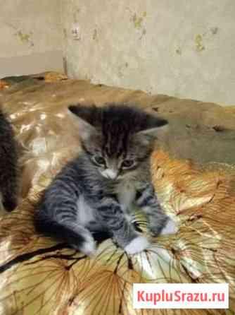 Кошка Тосно