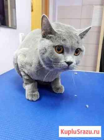 Стрижка кошек Магнитогорск