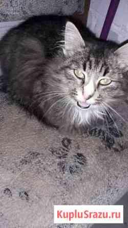 Кошка Городец
