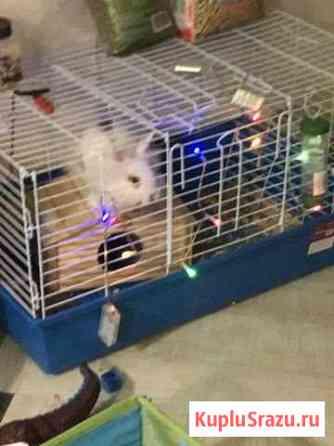 Отдам кролика с клеткой бесплатно Нижний Новгород