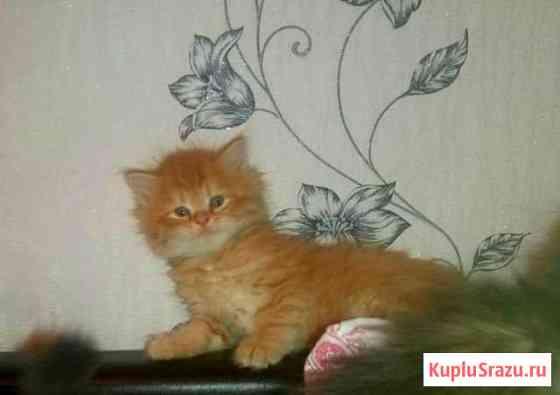 Котята Гатчина