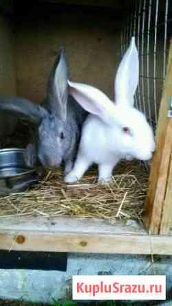 Продается кролики Выборг