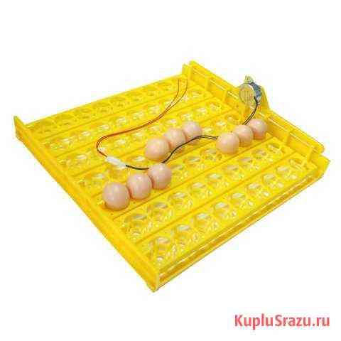 Инкубационный лоток для яиц Барнаул