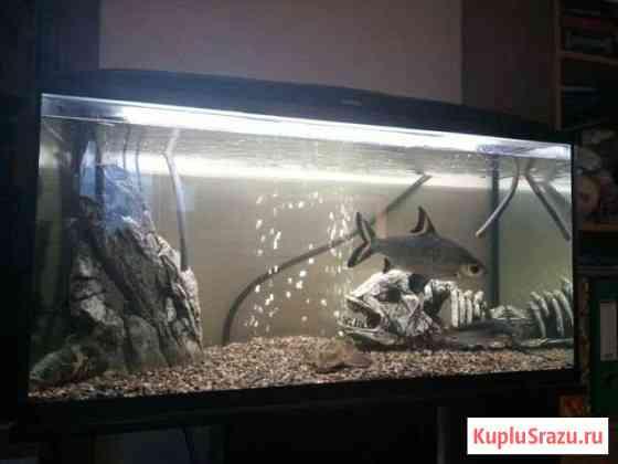 Продам аквариум 200 литров полный комплект Кудрово