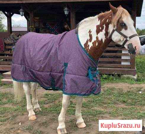 Попона зимняя для лошади Коммунар