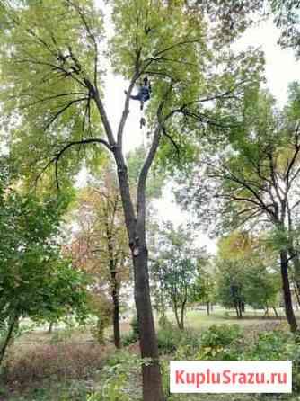 Выполню работы по спилу деревьев, чистке деревьев Кудрово
