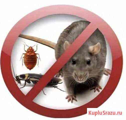 Клопы тараканы блохи мыши Северодвинск