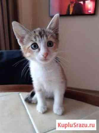 Кошка бесплатно Астрахань