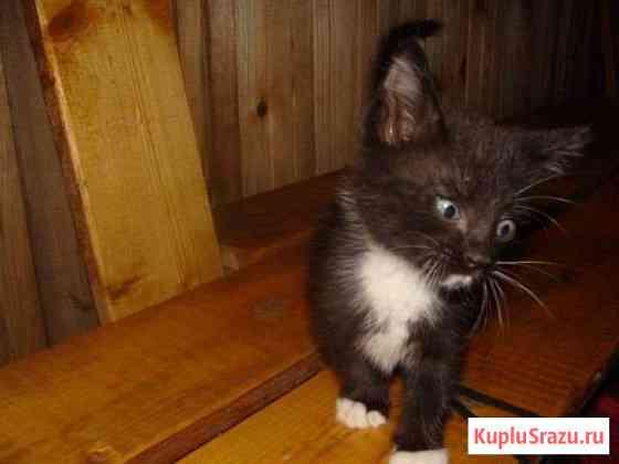Котятки Большое Полпино