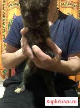 Отдам котят, в ответственные и любящие руки Северодвинск