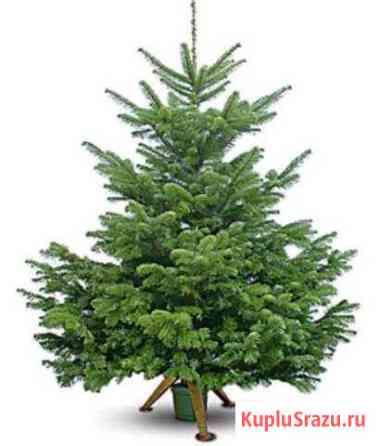 Новогодние елки Котлас