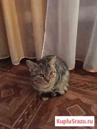 Котёнок Мелеуз