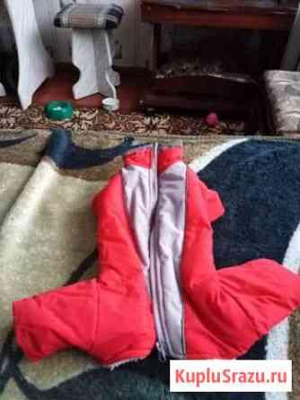 Одежда для собак Белебей
