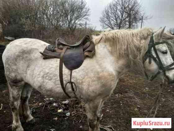 Лошадь Прохоровка