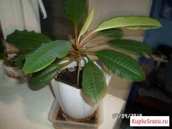 Мини-пальма на Вашем окне или в офисе Губкин