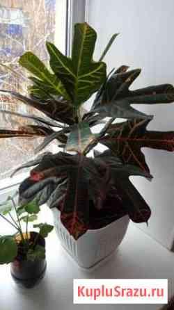 Цветок Стерлитамак