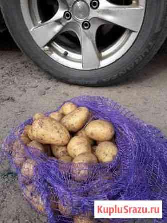 Картофель в Незнамово Старый Оскол