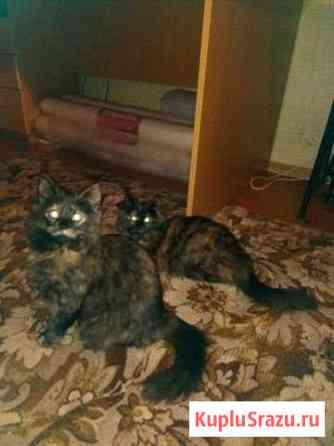 Кошки- лол Боголюбово