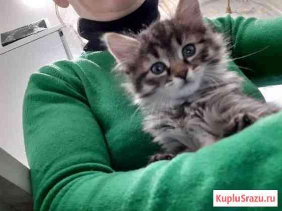 Кошка Александров