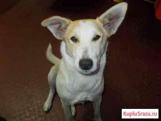 Молодая стерилизованная собака - для вас Воронеж