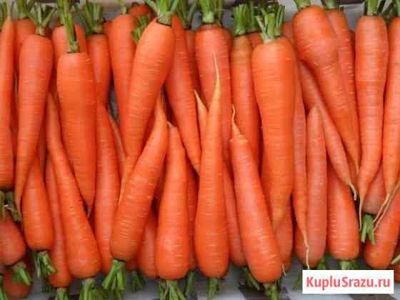 Морковь с доставкой Глинищево