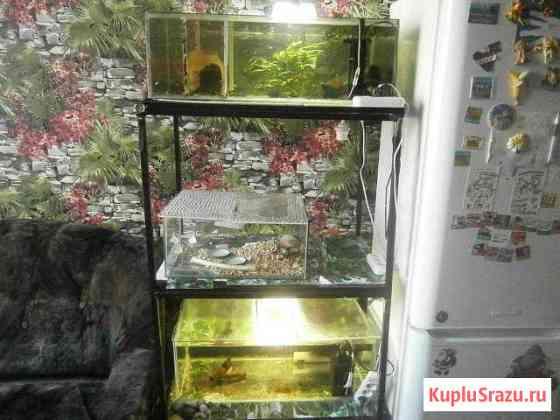 Стойка для содержания и разведения аквариумных рыб Клинцы