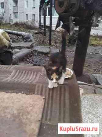 Кошечка Вязники