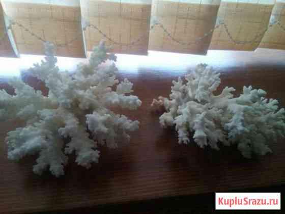 Кораллы натуральные Волгоград