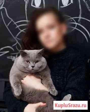Кот на вязку Череповец