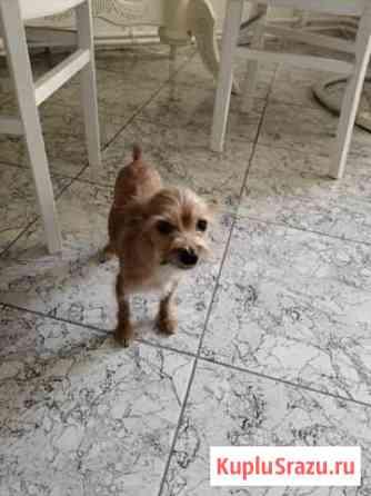 Собака Лиски