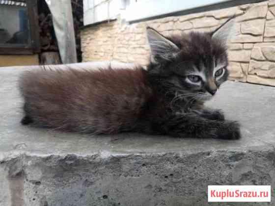 Котята Россошь