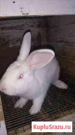 Кролики(Самочки) Острогожск