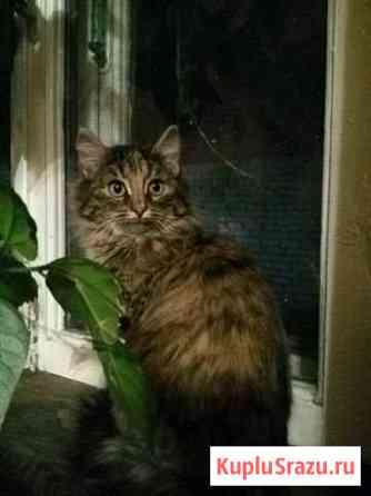 Кошечка котенок 3 -4 месяца в добрые руки Иваново
