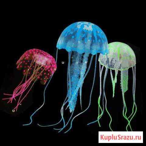 Медуза для аквариума Калуга