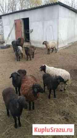Мясо из лпх Средний Икорец