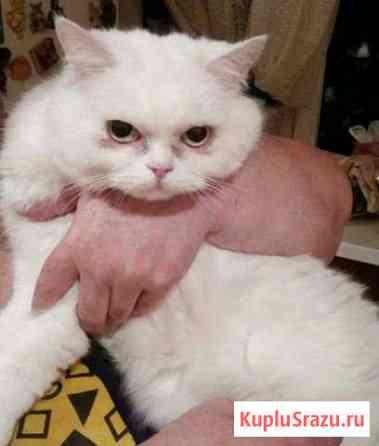 Кошка Леди Бьянка ищет дом Воронеж