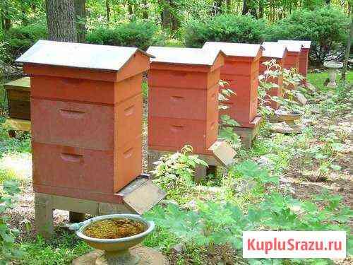 Пчелосемья, пасека Ольховатка