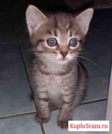 Кошка Иваново