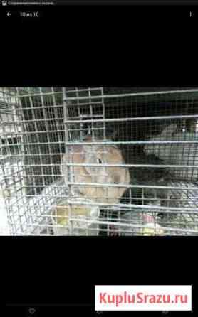 Кролики Майский