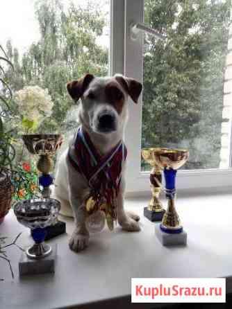 Чемпион для вязки Обнинск