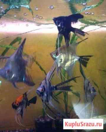 Аквариумные рыбки, креветки,растения, корм для рыб Калуга